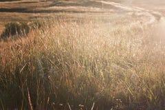 Solljus och daggdroppar av gräs Royaltyfria Foton