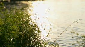 Solljus och floden arkivfilmer
