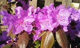 Solljus och regndroppar på blommor Fotografering för Bildbyråer