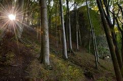 Solljus och skog royaltyfri bild