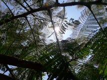 Solljus och trees royaltyfri foto