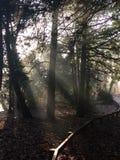 Solljus och trees Arkivfoto