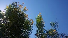 Solljus och växter Royaltyfri Foto