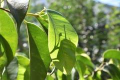 Solljus på en grön växt royaltyfria bilder