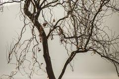 Solljus på ett träd Arkivfoton