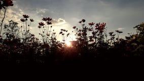 Solljus på rosa färgblomman Royaltyfria Foton