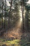 Solljus sörjer igenom träd Arkivbilder