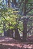 Solljus skiner mellan sidorna i skogen Arkivbild