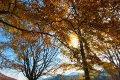 Solljus som bryter till och med träden royaltyfri bild
