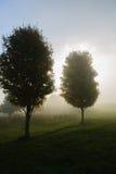 Solljus som gör strimmig till och med dimmiga träd. Royaltyfri Bild
