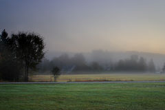 Solljus som gör strimmig till och med dimmiga träd på en höstmorgon royaltyfri fotografi
