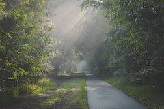 Solljus som kommer till och med träd och dimmiga dimmiga villkor på den cykla och gå banan Den Zonlicht dörren de boomtoppen en-m royaltyfria foton