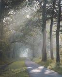 Solljus som kommer till och med träd och dimmiga dimmiga villkor på den cykla och gå banan Den Zonlicht dörren de boomtoppen en-m arkivfoto