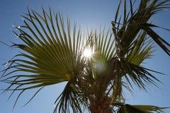 Solljus som plirar till och med palmträdet royaltyfri foto