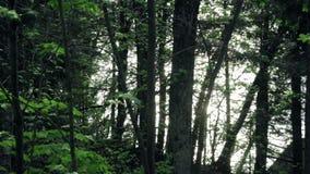 Solljus som reflekterar av en sjö till och med en nordlig skog lager videofilmer