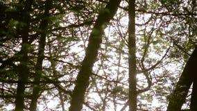 Solljus som reflekterar av en sjö till och med en nordlig skog stock video