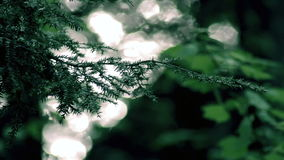 Solljus som reflekterar av en sjö till och med en skog arkivfilmer