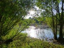 Solljus som reflekterar på yttersidan av en liten sjö som omges av frodig grön vegetation Arkivbilder