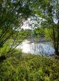 Solljus som reflekterar på yttersidan av en liten sjö som omges av vegetation Royaltyfri Fotografi