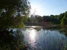 Solljus som reflekterar på yttersidan av en sjö som omges av träd Arkivbild