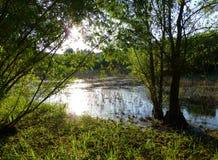 Solljus som reflekterar på yttersidan av ett grunt damm som omges av frodig grön vegetation Arkivbilder