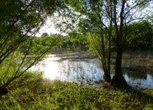 Solljus som reflekterar på yttersidan av ett litet damm som omges av frodig vegetation Royaltyfria Bilder