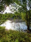 Solljus som reflekterar på yttersidan av ett litet damm som omges av vegetation Royaltyfria Bilder