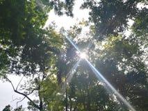 Solljus som skiner till och med filialerna royaltyfri foto