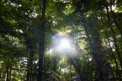 Solljus som visas in i en skog arkivbilder