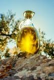Solljus till och med flaskan med olivolja Royaltyfri Foto