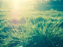 Solljus till och med grönt gräs, naturlig sommarbakgrund Arkivfoton