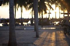Solljus till och med kokosnötaftonen på havet Arkivfoto