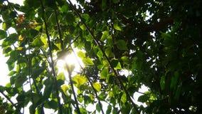 Solljus till och med träd Fotografering för Bildbyråer
