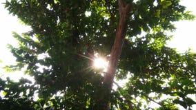 Solljus till och med träd Royaltyfri Foto