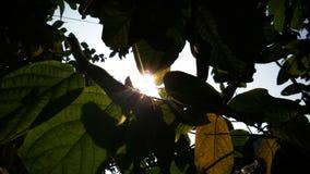 Solljus till och med träd Arkivbild