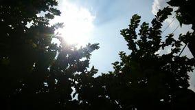 Solljus till och med träd Arkivbilder