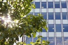 Solljus till och med träd med modern kontorsbyggnad, Manchester UK Royaltyfri Fotografi