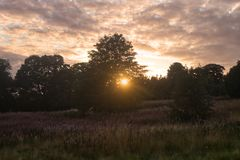 Solljus till och med träd på en kulle arkivbilder