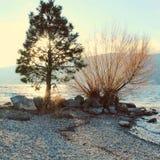 Solljus till och med träd på sjön Arkivfoto