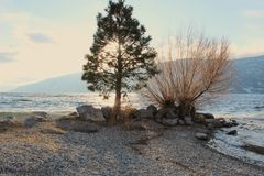 Solljus till och med träd på sjön Arkivbild