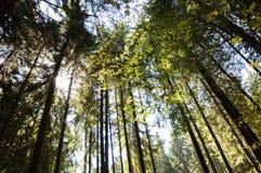 Solljus till och med trädblast royaltyfria foton