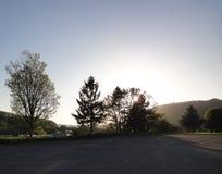 Solljus till och med treesna Arkivfoton