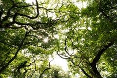 Solljus till och med treesna Arkivbilder