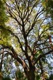 Solljus till och med treesna Arkivfoto