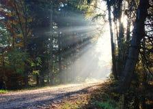 Solljusbortgång till och med träd Arkivbilder