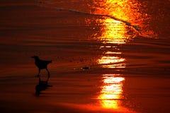 Solljusförfriskning på sanden på havsstranden arkivbilder