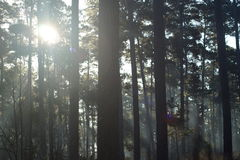 Solljussignalljus Fotografering för Bildbyråer
