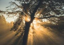Solljusstrålar i trädet royaltyfria bilder