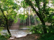 Solljusstrålar som kommer till och med träd över floden royaltyfri foto
