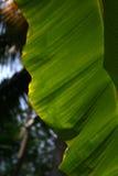 Solljusthrougt palmbladen Royaltyfri Fotografi